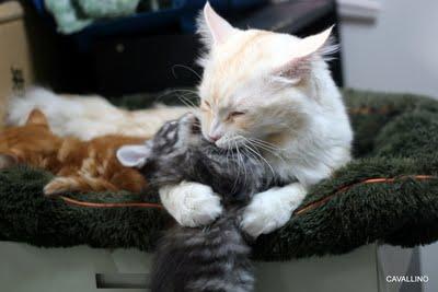 ぎゅっとして甘噛みする猫