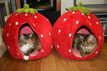 イチゴハウスとハチベッド♪