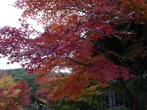 22日はお客様と一緒に箱根、伊豆にもみじ狩りに行って来ました。