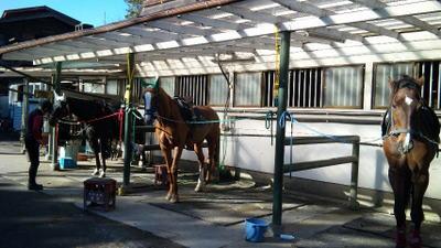 鉄の跳ね馬に乗って乗馬の練習に行って来ました。
